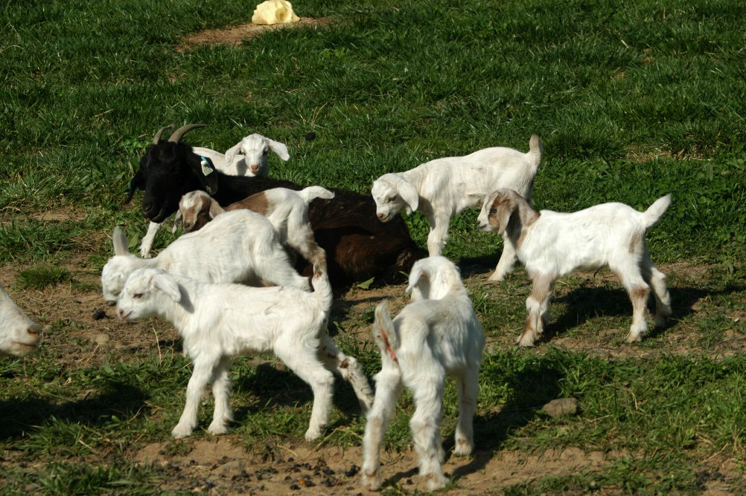 New Life at Horseshoe Canyon Guest Ranch: Kids, Puppies & a Foal – Oh My!