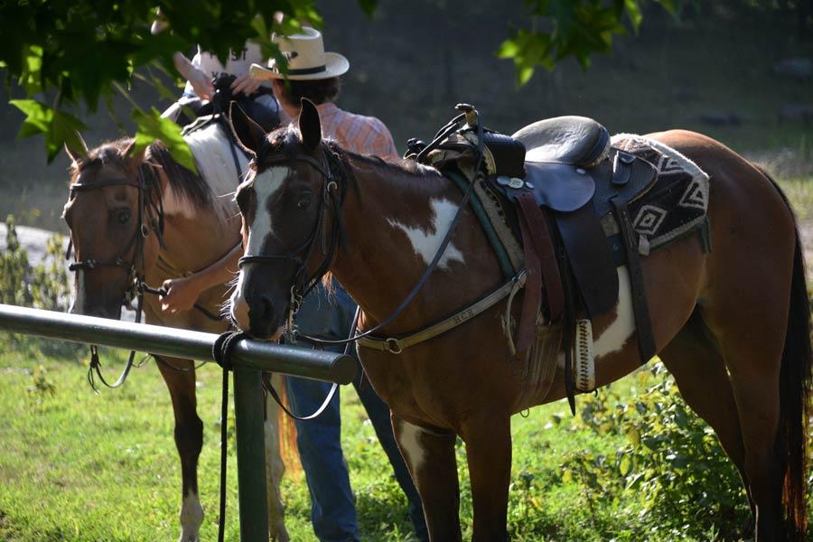 Horseback Riding in AR - Ozark Mountain Trail Horses