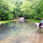 woman on horseback in stream