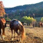 Horses at Horseshoe Canyon Ranch